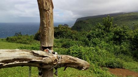 Past Hawi